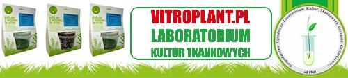 [Obrazek: vitroplant.jpg]